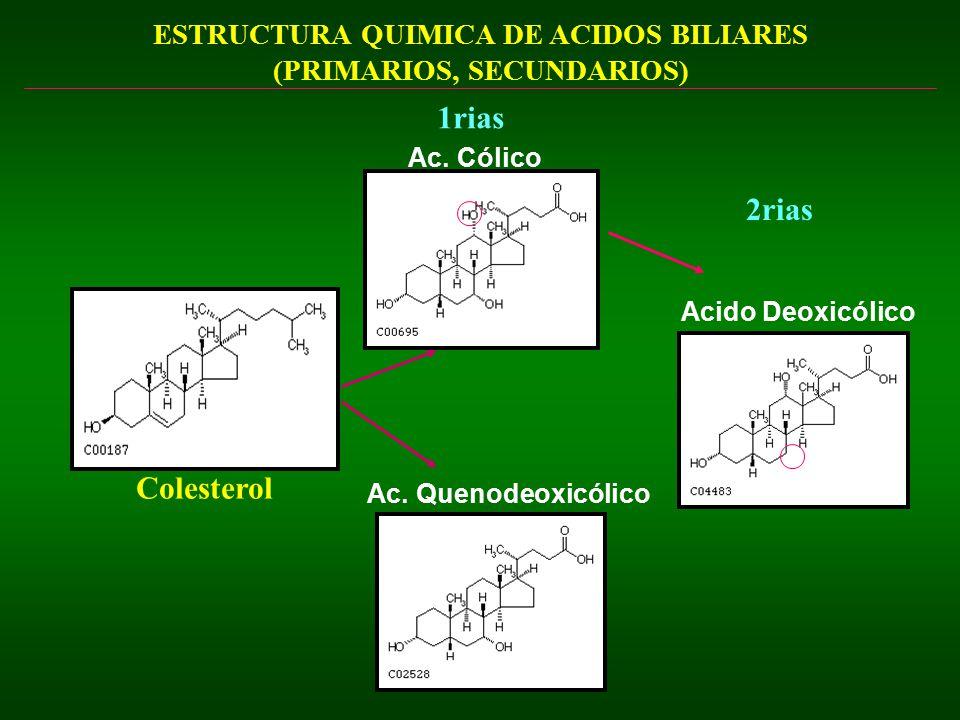 ESTRUCTURA QUIMICA DE ACIDOS BILIARES (PRIMARIOS, SECUNDARIOS)