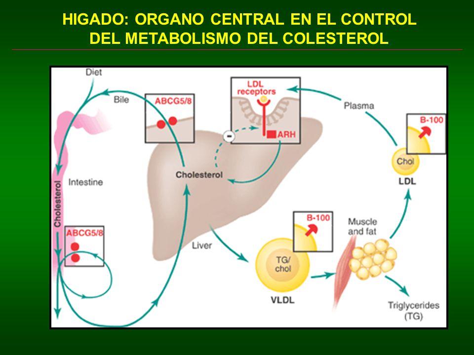 HIGADO: ORGANO CENTRAL EN EL CONTROL DEL METABOLISMO DEL COLESTEROL