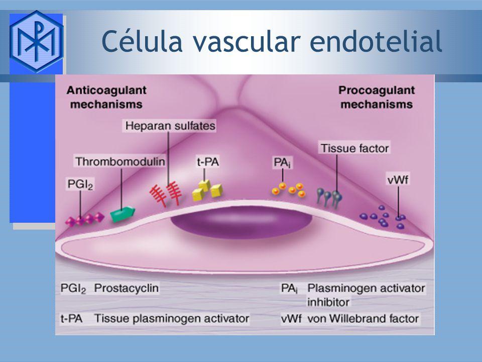 Célula vascular endotelial