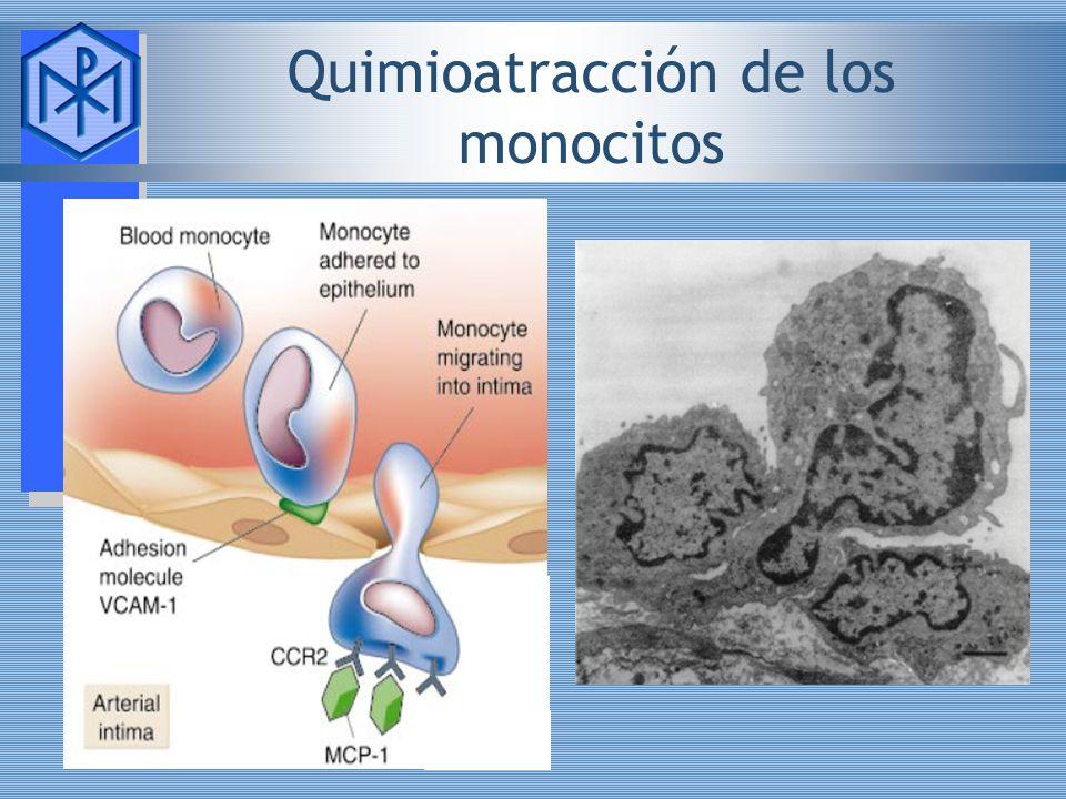 Quimioatracción de los monocitos