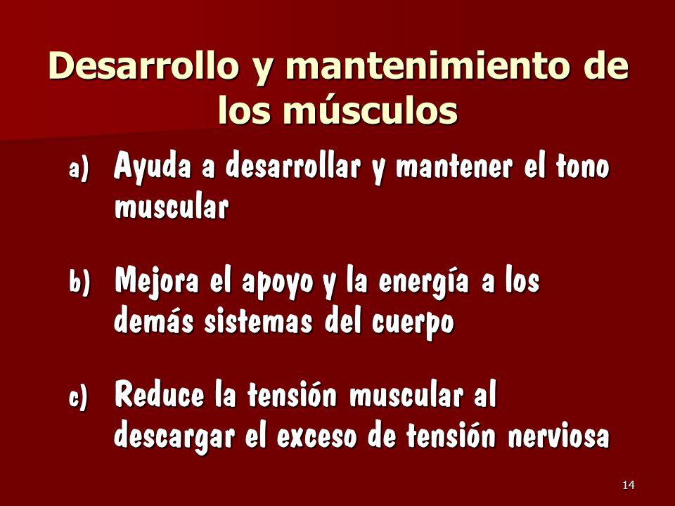 Desarrollo y mantenimiento de los músculos