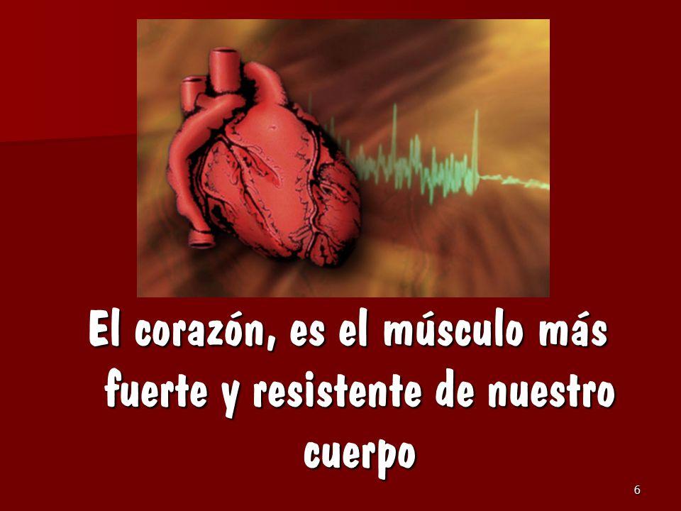 El corazón, es el músculo más fuerte y resistente de nuestro cuerpo