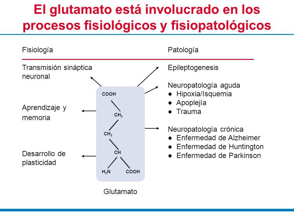 El glutamato está involucrado en los procesos fisiológicos y fisiopatológicos