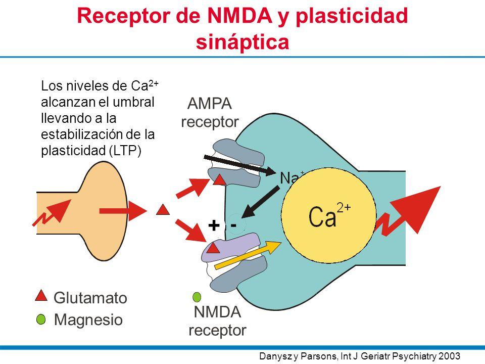 Receptor de NMDA y plasticidad sináptica