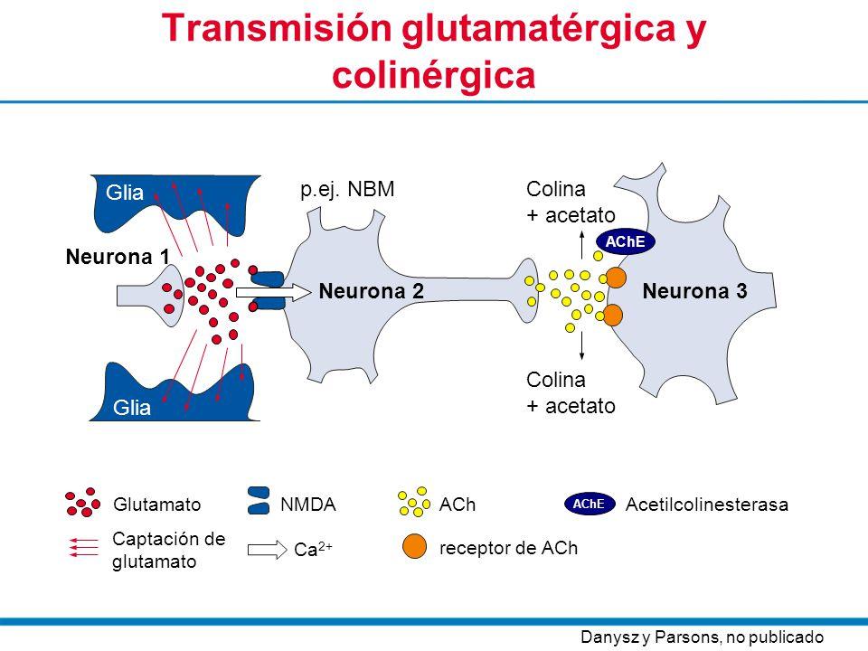 Transmisión glutamatérgica y colinérgica