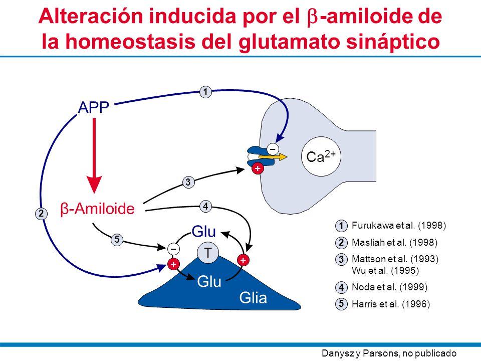 Alteración inducida por el -amiloide de la homeostasis del glutamato sináptico