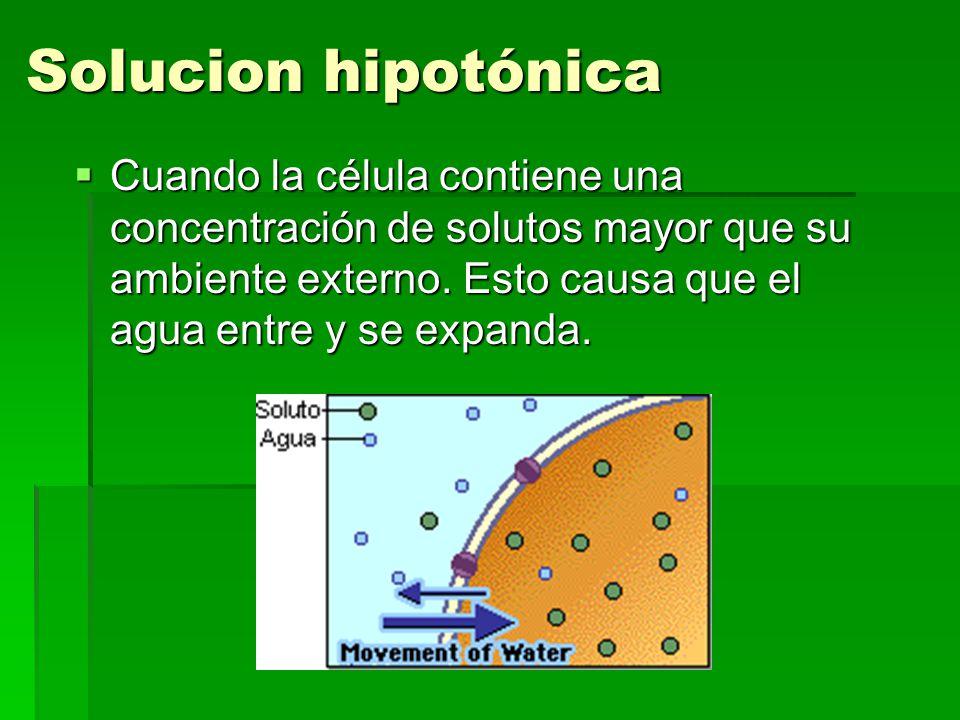 Solucion hipotónica Cuando la célula contiene una concentración de solutos mayor que su ambiente externo.