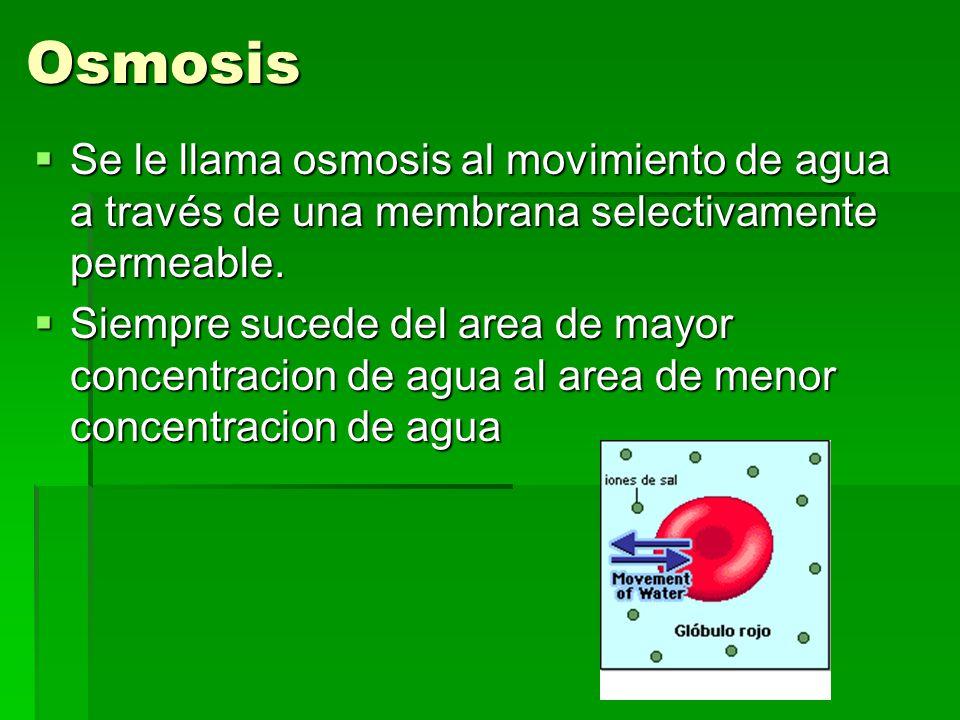 Osmosis Se le llama osmosis al movimiento de agua a través de una membrana selectivamente permeable.