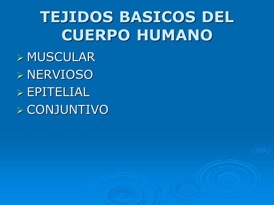 TEJIDOS BASICOS DEL CUERPO HUMANO
