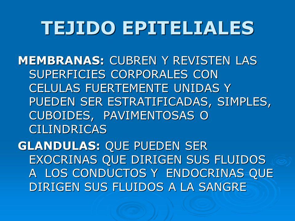 TEJIDO EPITELIALES