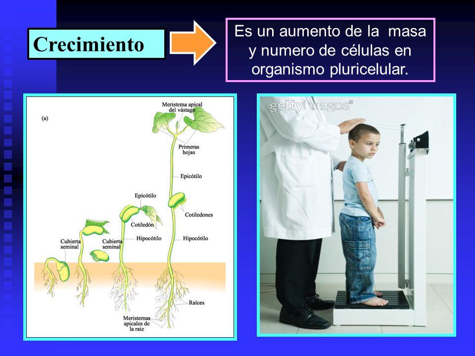 Es un aumento de la masa y numero de células en organismo pluricelular.