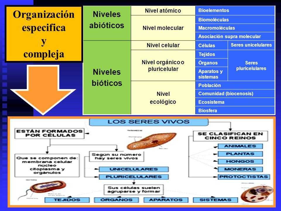 Organización especifica y compleja Nivel orgánico o pluricelular