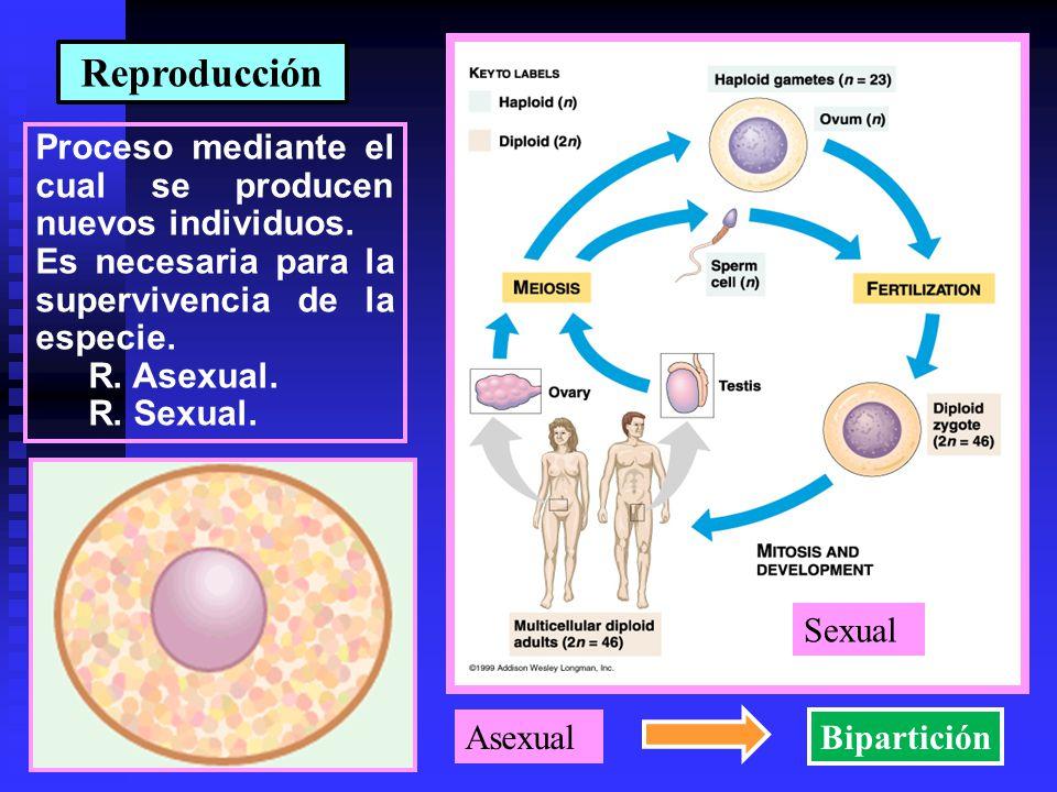 Reproducción Proceso mediante el cual se producen nuevos individuos.
