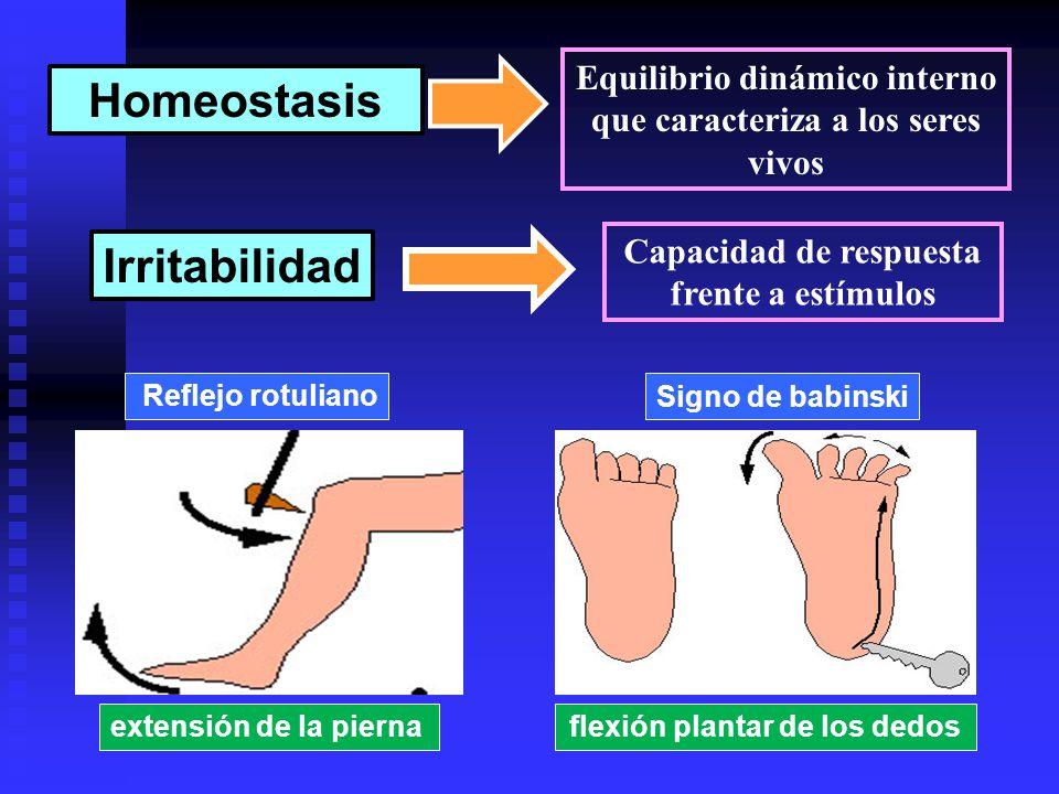 Homeostasis Irritabilidad