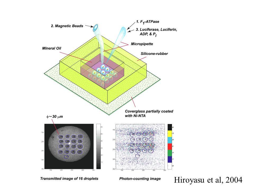 Hiroyasu et al, 2004