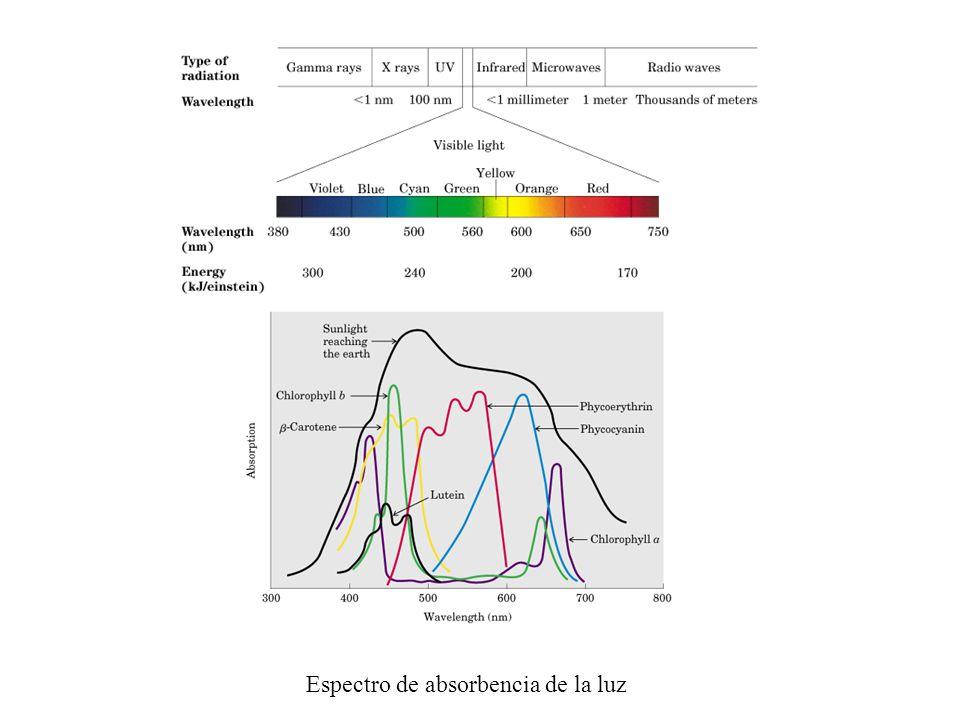 Espectro de absorbencia de la luz