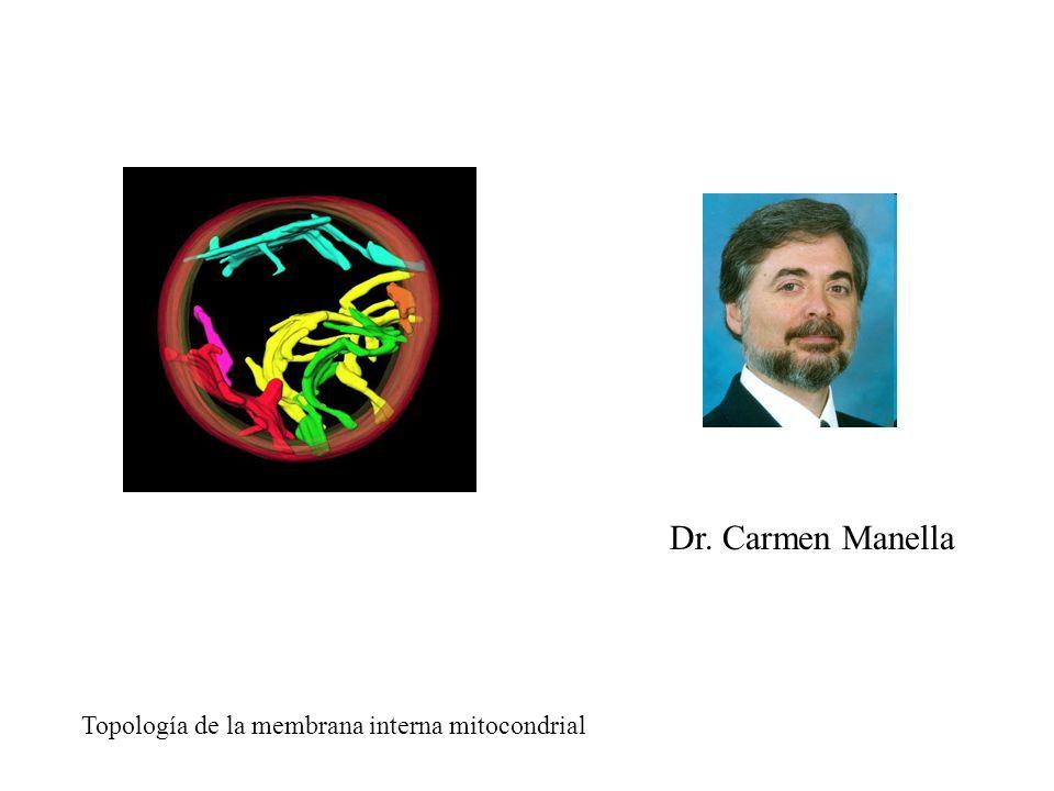 Dr. Carmen Manella Topología de la membrana interna mitocondrial