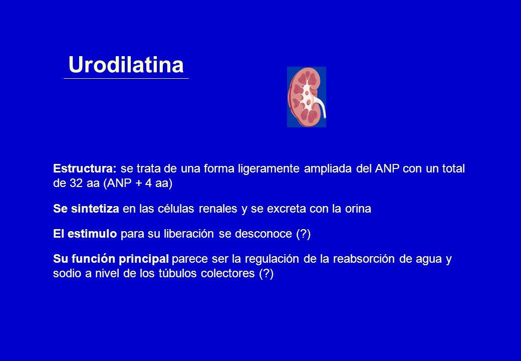 Urodilatina Estructura: se trata de una forma ligeramente ampliada del ANP con un total de 32 aa (ANP + 4 aa)