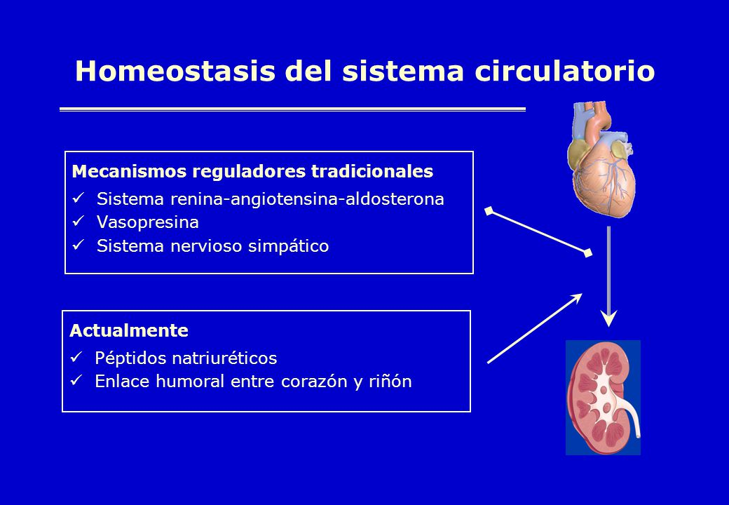 Homeostasis del sistema circulatorio