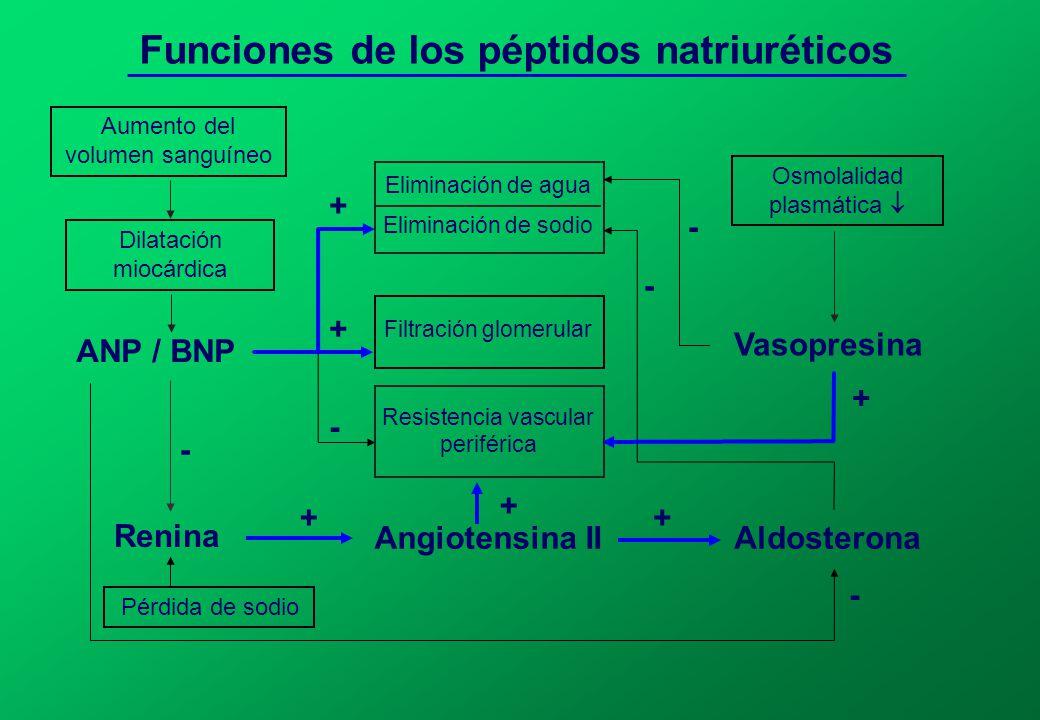 Funciones de los péptidos natriuréticos