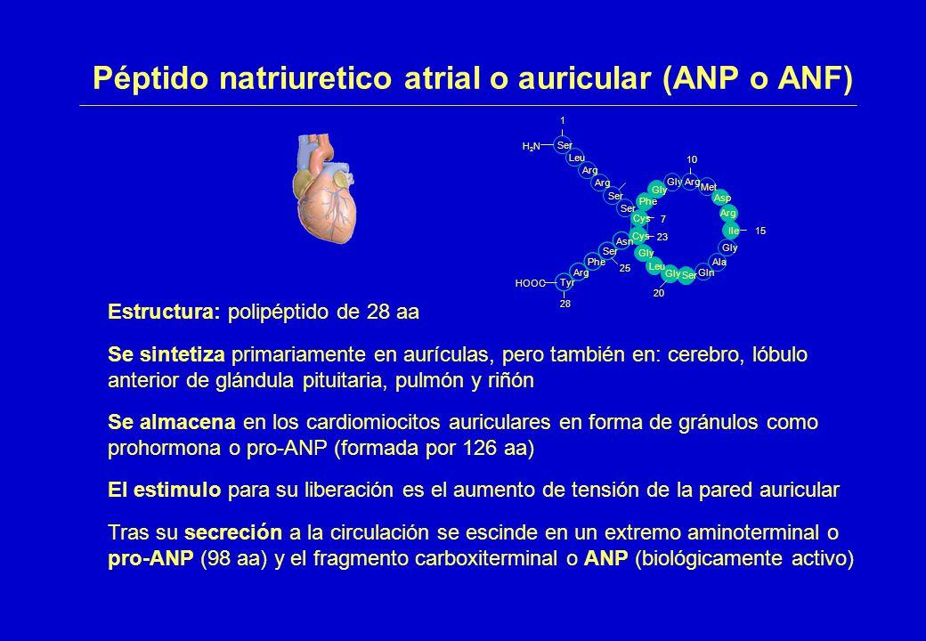 Péptido natriuretico atrial o auricular (ANP o ANF)