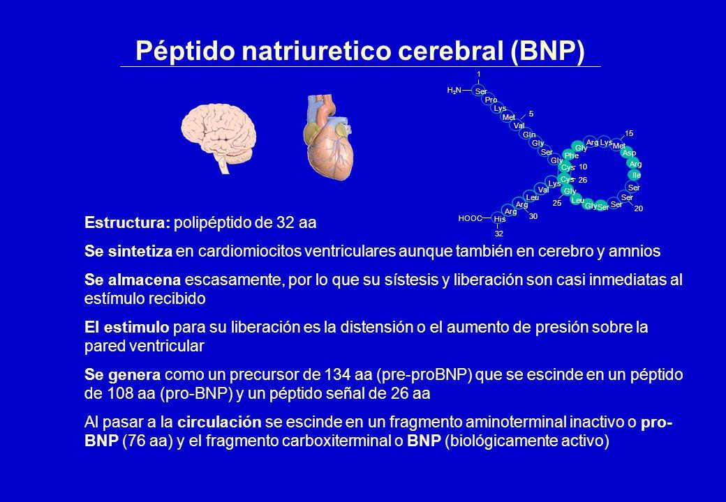 Péptido natriuretico cerebral (BNP)