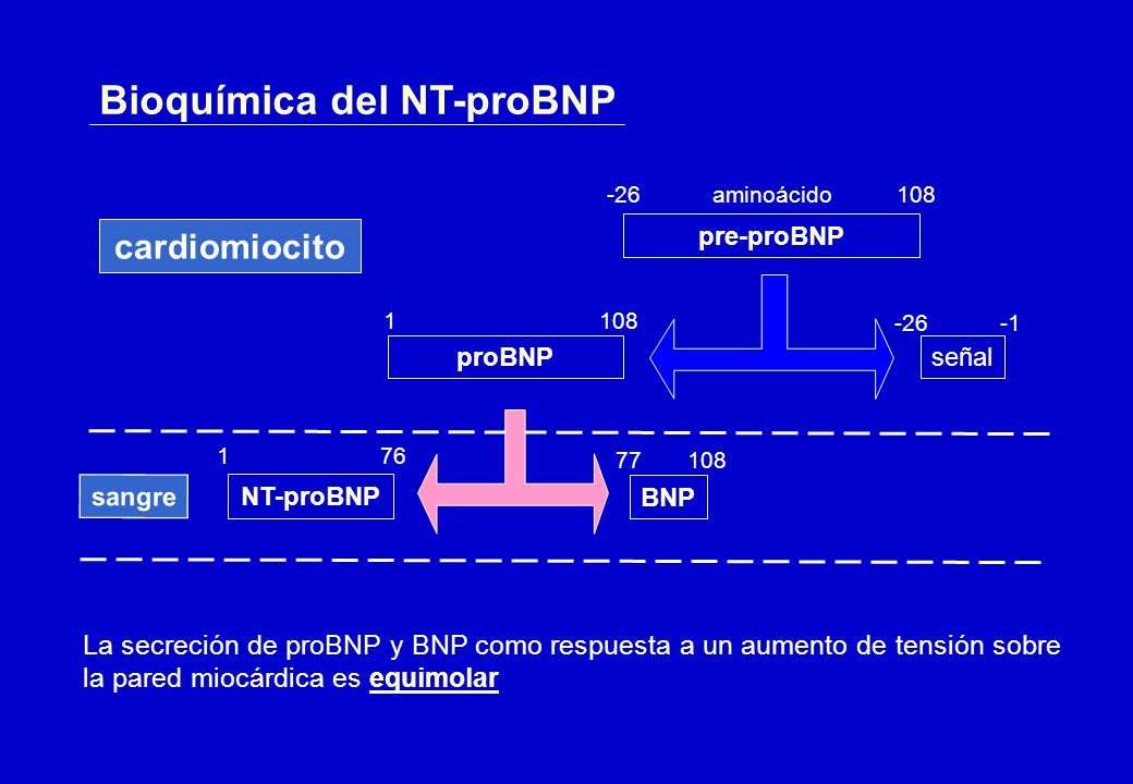 Bioquímica del NT-proBNP