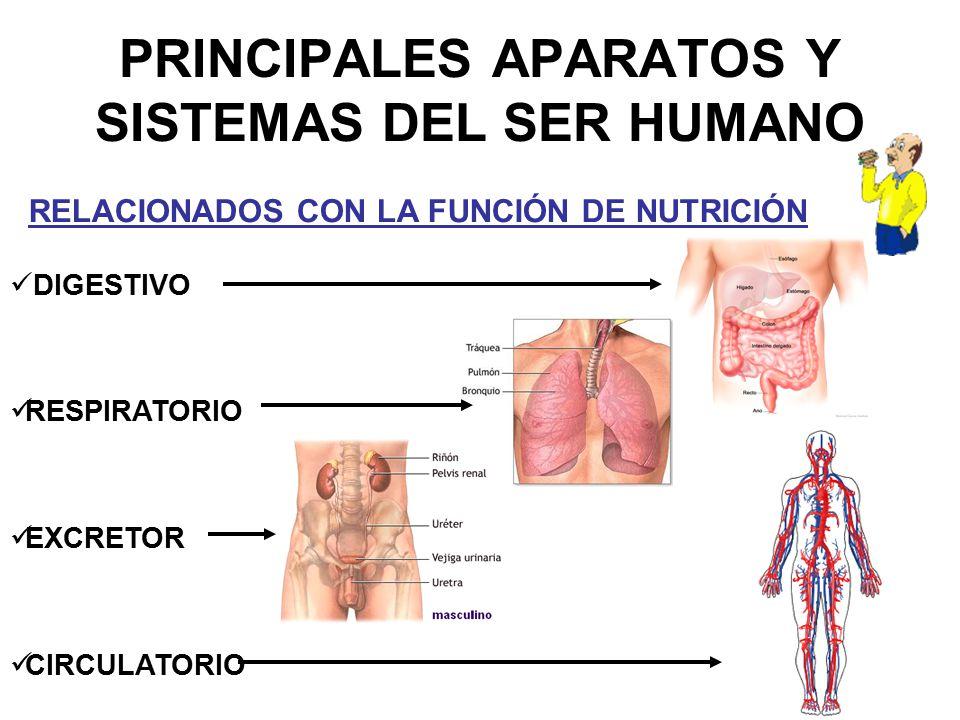 PRINCIPALES APARATOS Y SISTEMAS DEL SER HUMANO