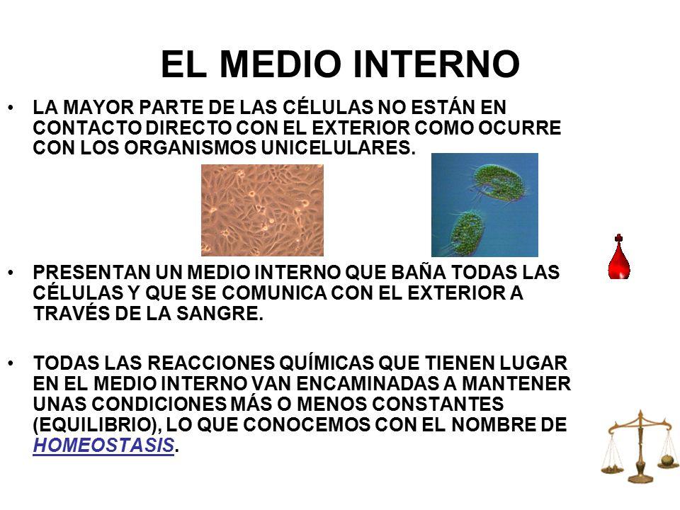 EL MEDIO INTERNO LA MAYOR PARTE DE LAS CÉLULAS NO ESTÁN EN CONTACTO DIRECTO CON EL EXTERIOR COMO OCURRE CON LOS ORGANISMOS UNICELULARES.