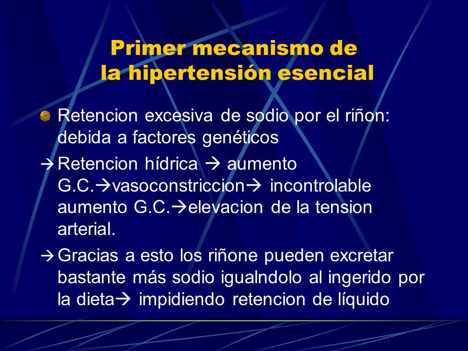 Primer mecanismo de la hipertensión esencial