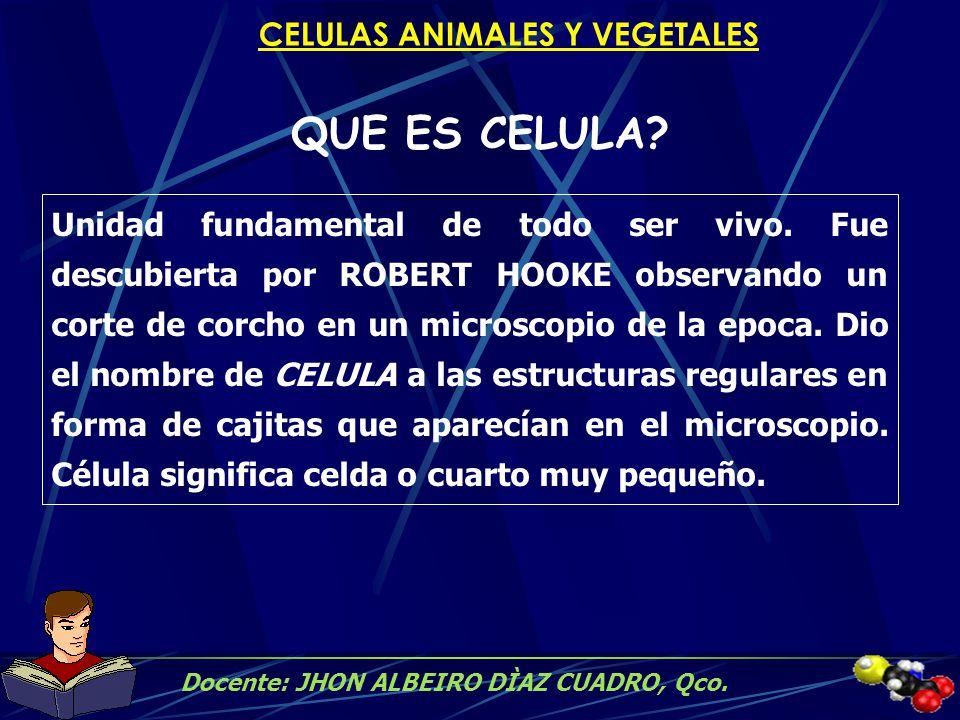 CELULAS ANIMALES Y VEGETALES