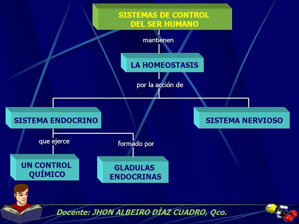 SISTEMAS DE CONTROL DEL SER HUMANO SISTEMA ENDOCRINO UN CONTROL