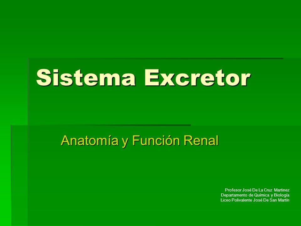 Anatomía y Función Renal
