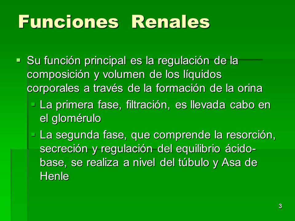 Funciones Renales Su función principal es la regulación de la composición y volumen de los líquidos corporales a través de la formación de la orina.
