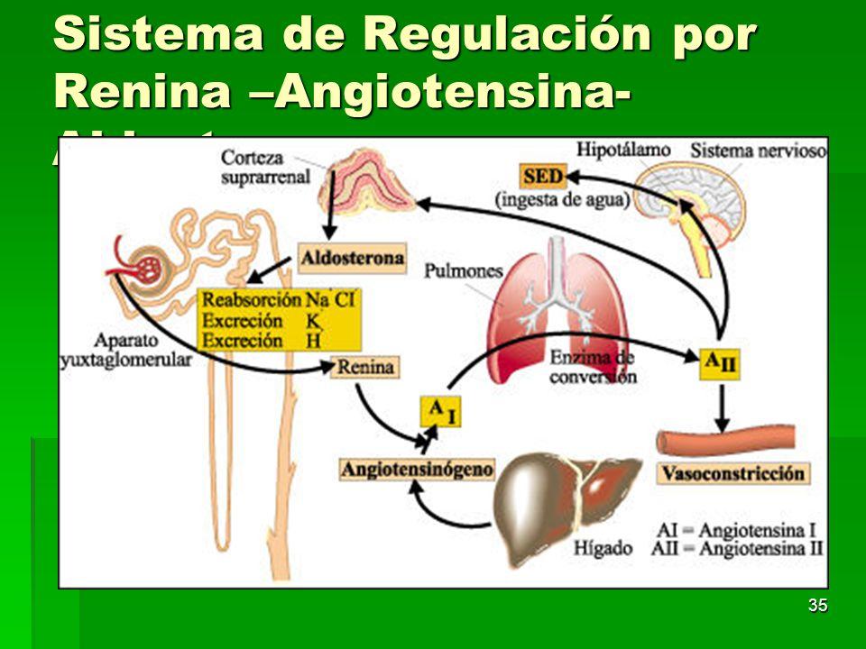 Sistema de Regulación por Renina –Angiotensina- Aldosterona