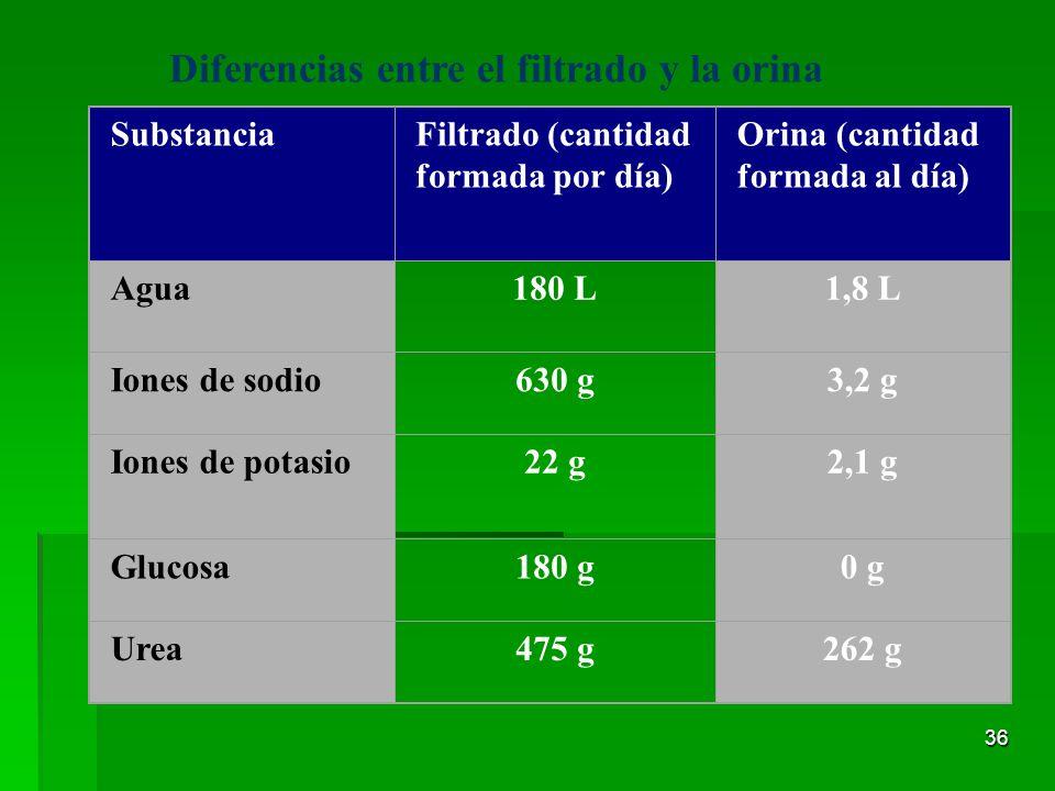 Diferencias entre el filtrado y la orina