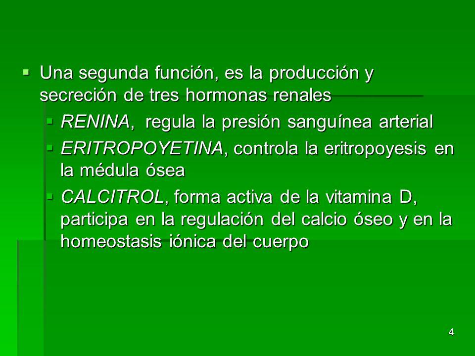 Una segunda función, es la producción y secreción de tres hormonas renales