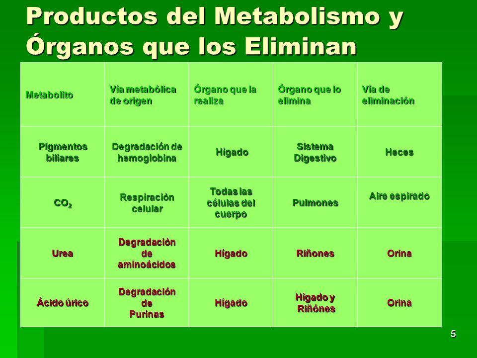 Productos del Metabolismo y Órganos que los Eliminan