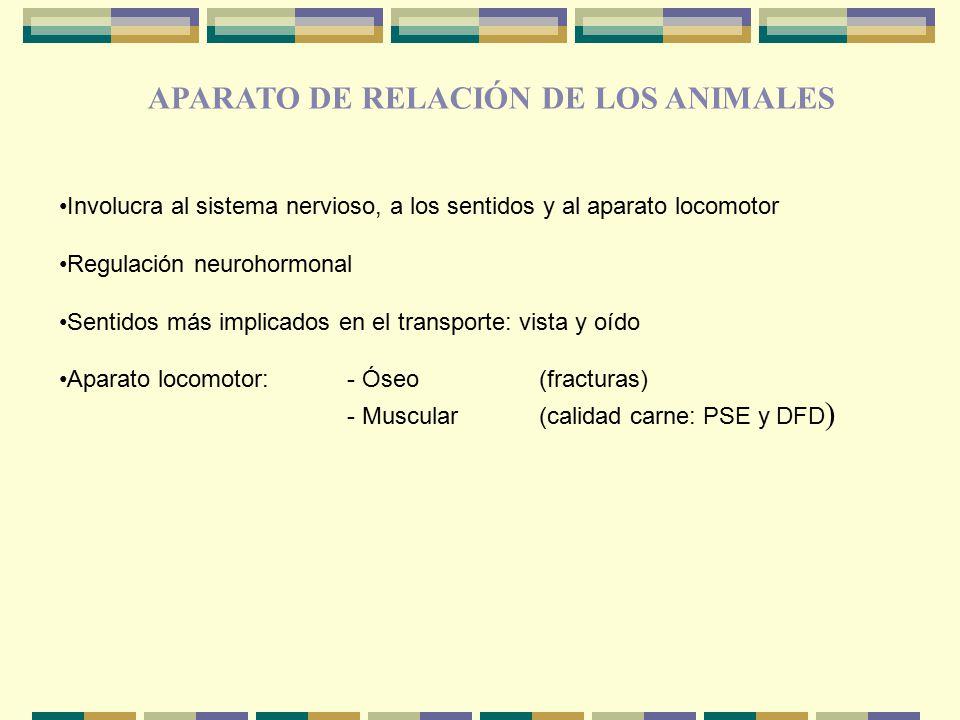APARATO DE RELACIÓN DE LOS ANIMALES