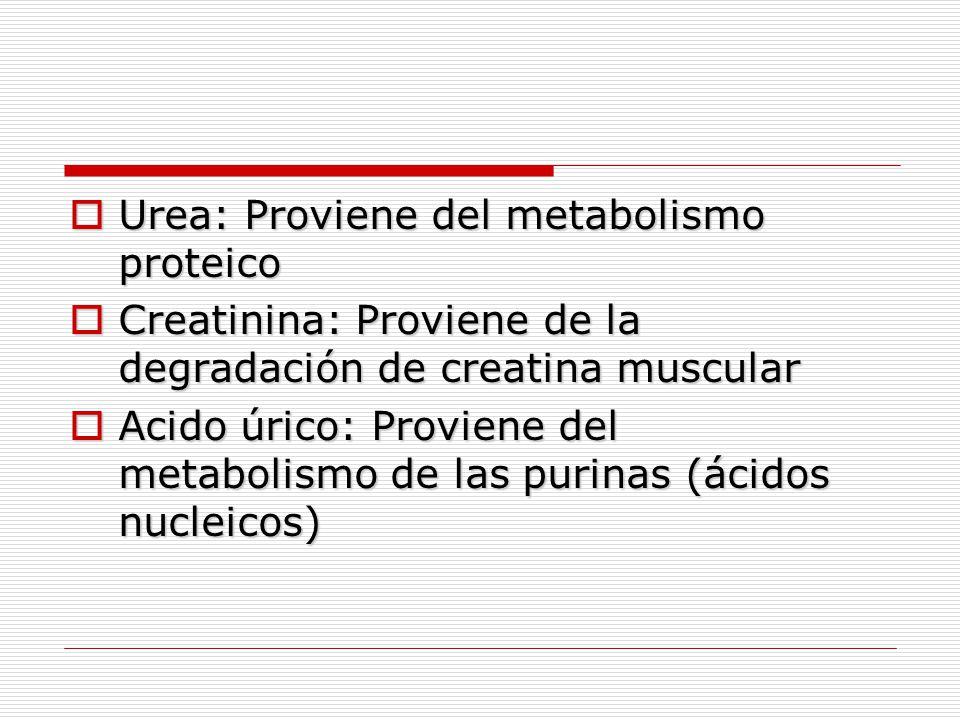 Urea: Proviene del metabolismo proteico