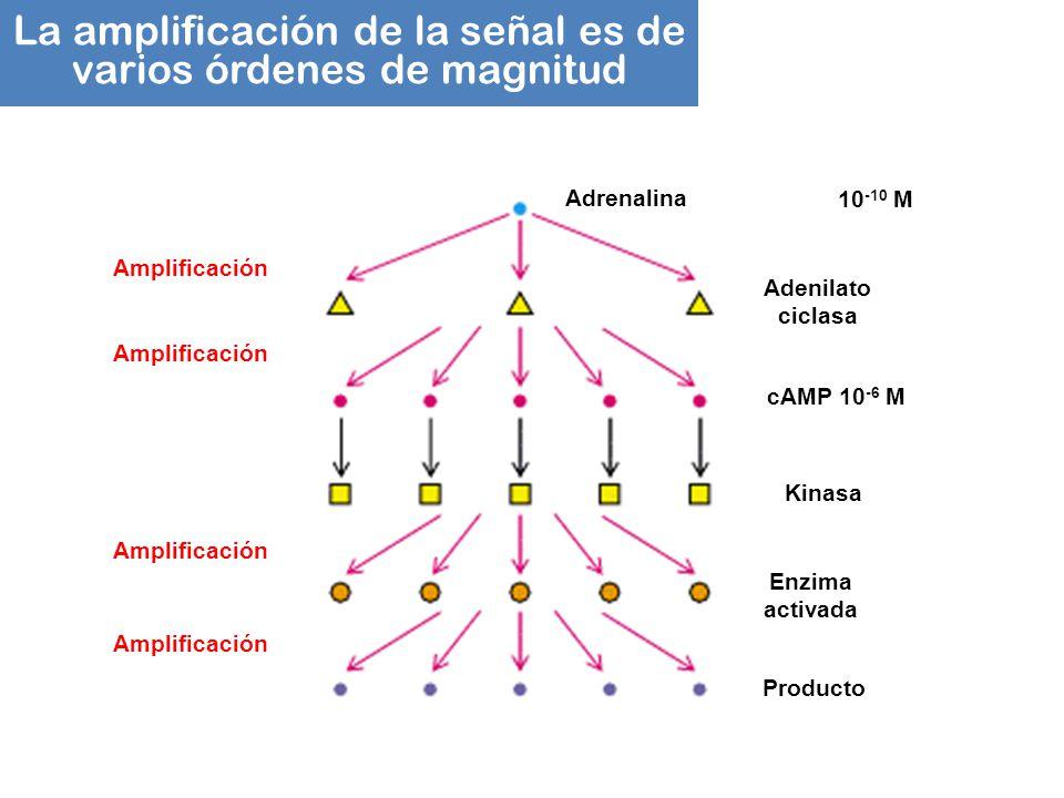 La amplificación de la señal es de varios órdenes de magnitud
