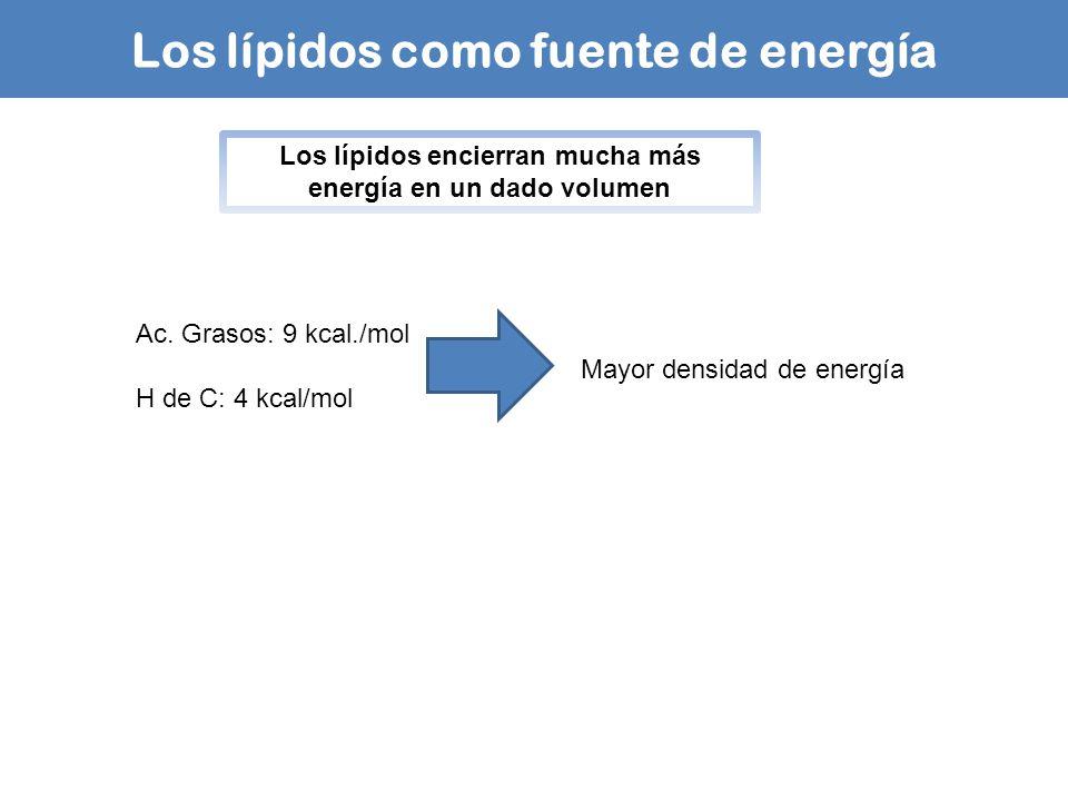 Los lípidos como fuente de energía