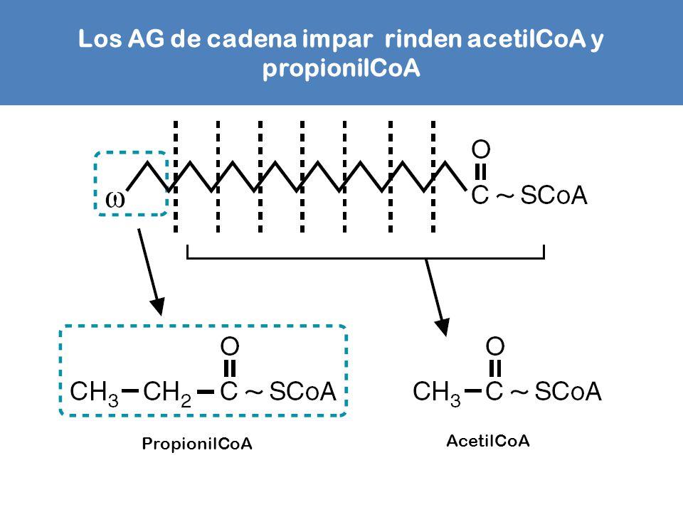 Los AG de cadena impar rinden acetilCoA y propionilCoA