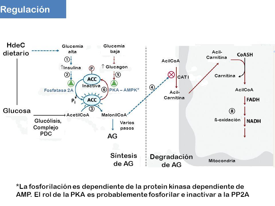 Regulación HdeC dietario Glucosa AG Síntesis Degradación de AG de AG