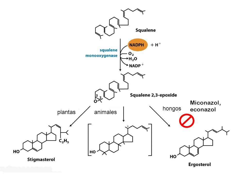Miconazol, econazol plantas hongos animales