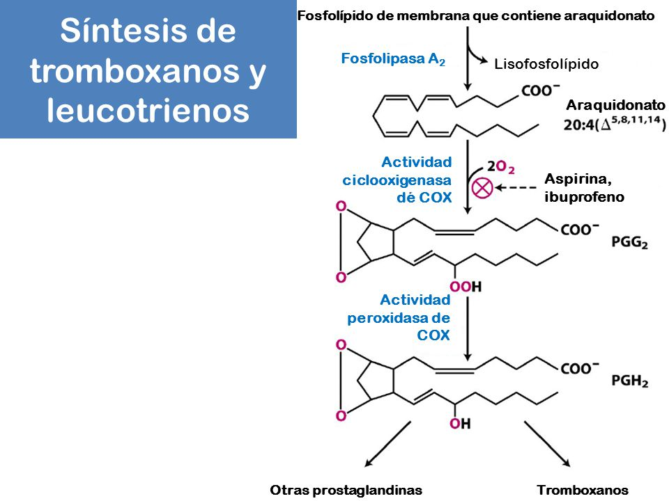 Síntesis de tromboxanos y leucotrienos
