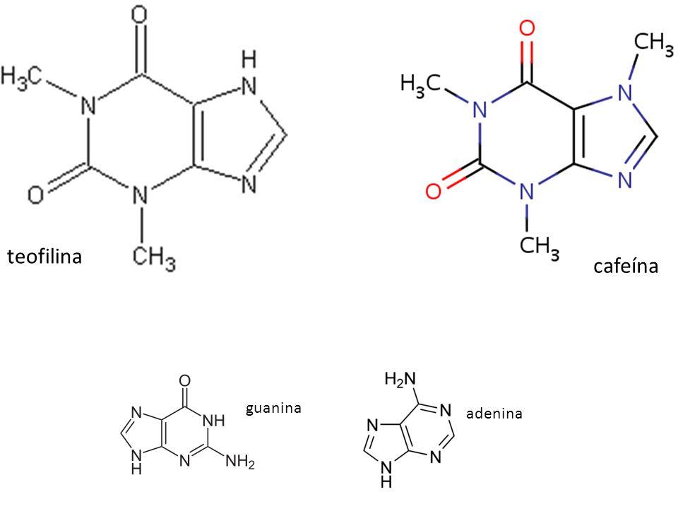 teofilina cafeína adenina guanina