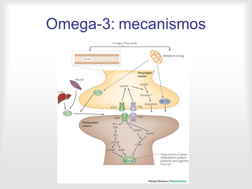 Omega-3: mecanismos