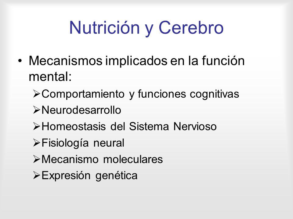Nutrición y Cerebro Mecanismos implicados en la función mental:
