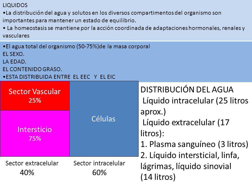Líquido intracelular (25 litros aprox.)